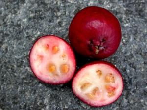 Red psidium cattleianum